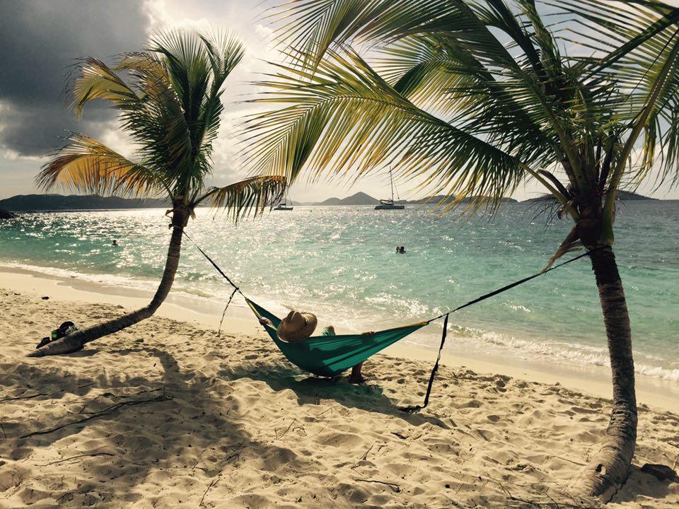 Palm tree's on a beach